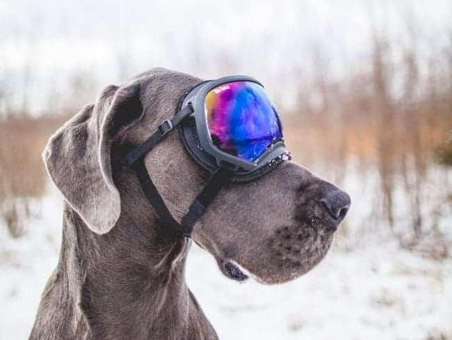 meenemen winterreis ski